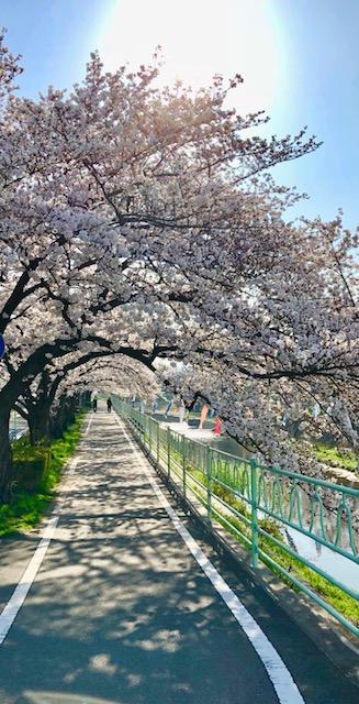 春 はる haruの写真